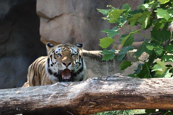 Riverbanks Zoo August 2020