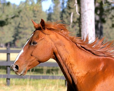 Knirk's Horses 9-30-15