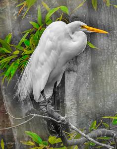 FINE ART BIRDS