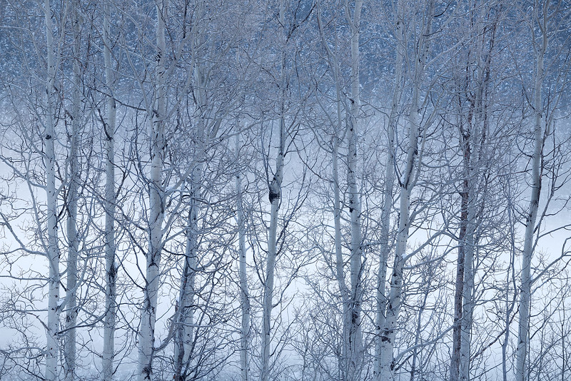 Aspen Mist
