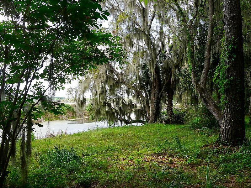 Swamp web.jpg