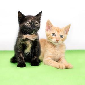 Cats 08-29-21