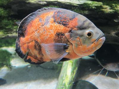 20150423 Baltimore Aquarium