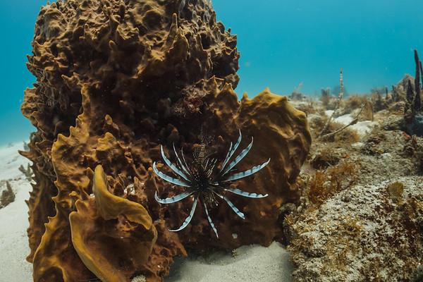 Dominican Republic - Underwater