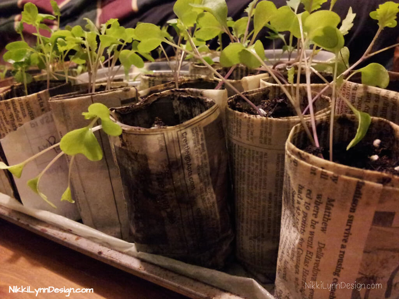 Newspaper Seedling Garden Pots