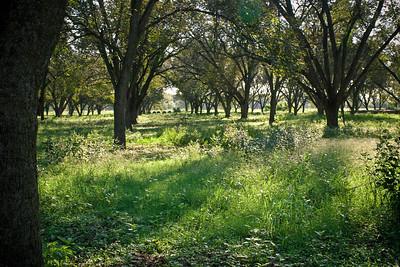 Laidlaw Pecan Orchard