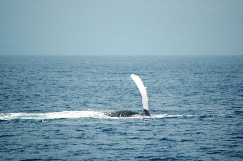 whaleroll.jpg