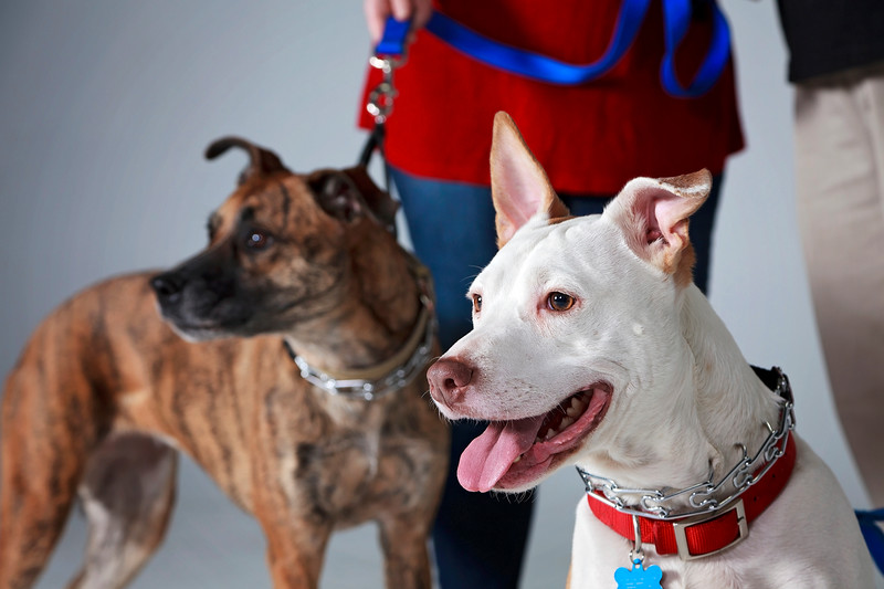 Picture Pawfect - 19 marca 2017 - 402-1.jpg