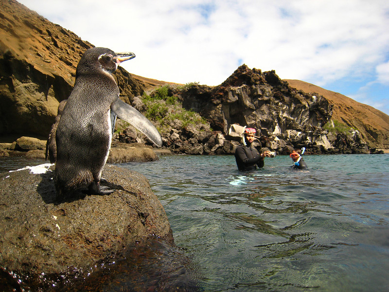 Diving in the Galapagos (50 of 392)