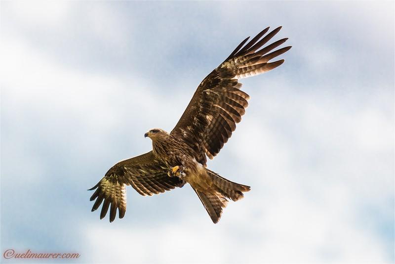 2016-06-29 Vogelpark Steinen -0U5A3743.jpg