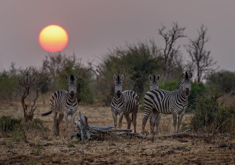 Botswana_0818_PSokol-5292-Edit.jpg