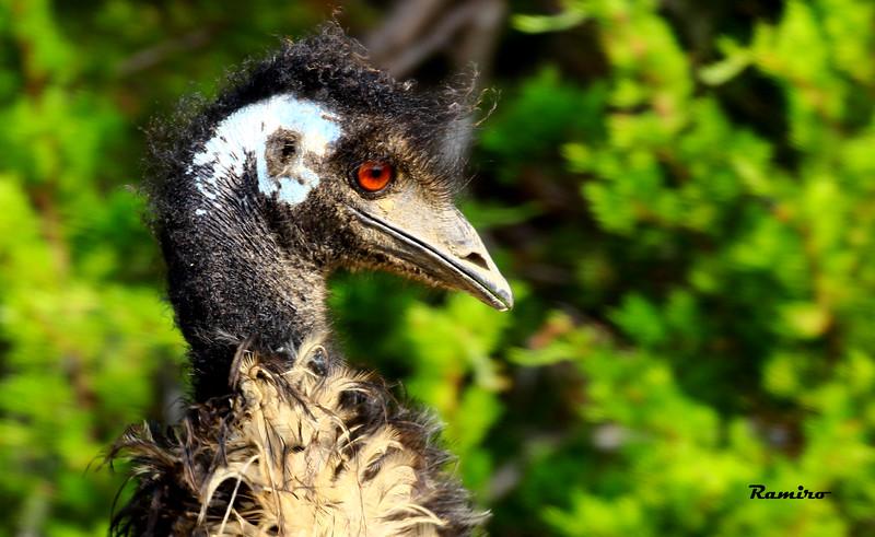 Emu 8-15-15 321.jpg
