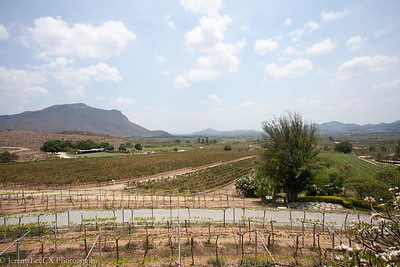 Day 2 - Hua Hin Vineyard