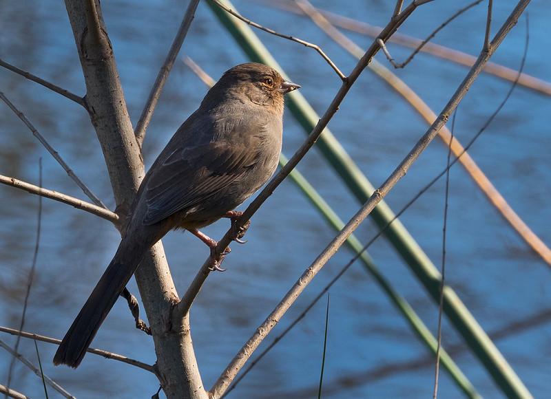bird close-up.jpg