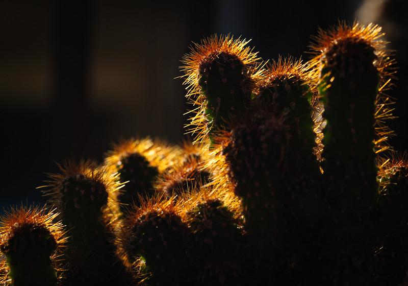 Cactus 091319-0120.jpg