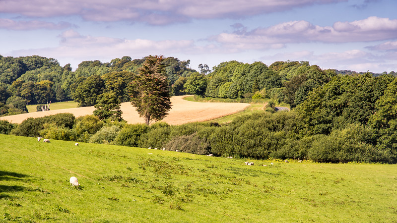 Rolling Dorset landscape
