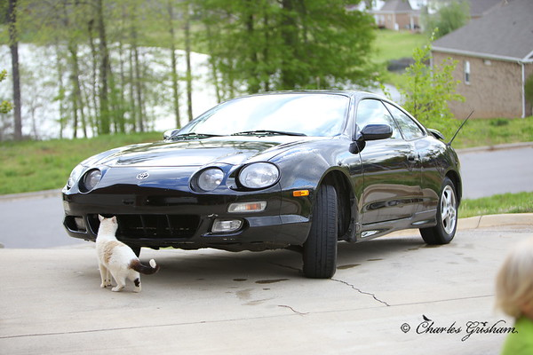 My 1999 Celica for Sale