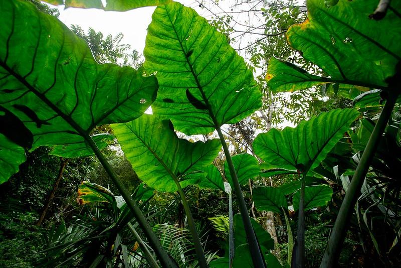 Pratt_Belize_25.jpg