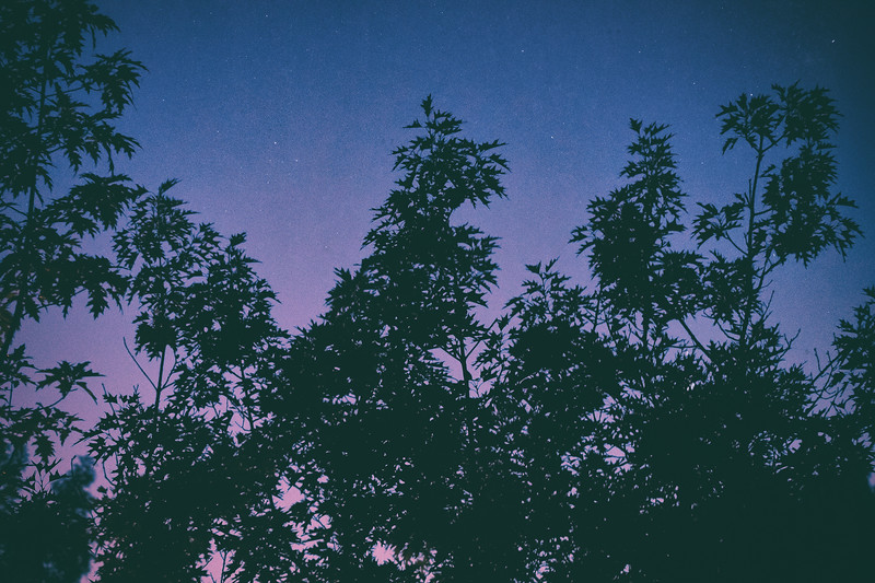 Twilight Trees