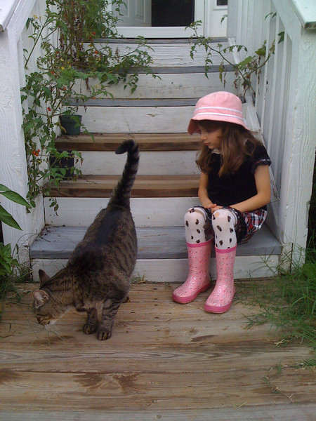 Neighbor cat, Kili