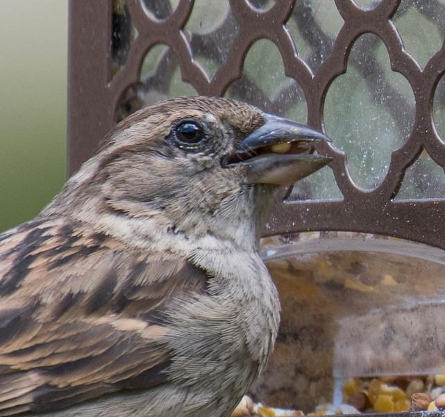 05-10-2019-birds_(4_of_12).jpg