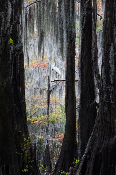 Cypress_Swamps_1117_PSokol-478-Edit-2.jpg