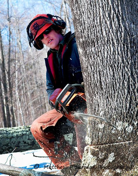 211 Logging_3517.jpg