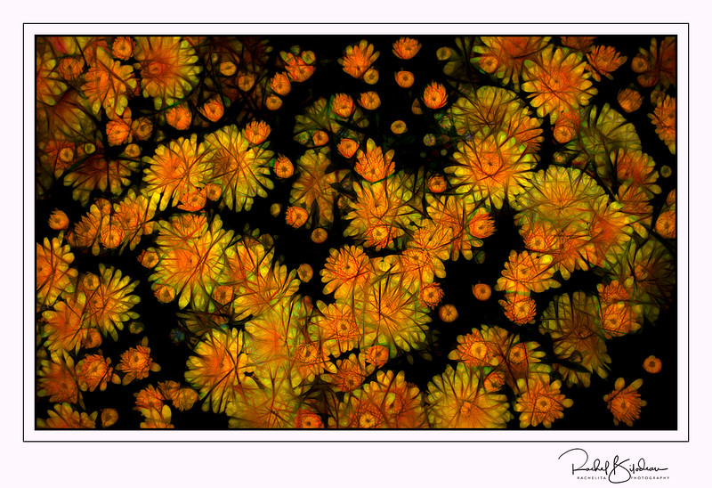 jean-talon-161001-D7000-DSC_2442-glow contrast cables-sig.jpg