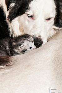 Katzenbabies mit Mutter