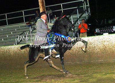 CLASS 35  URHOEA RACKING HORSE STAKE