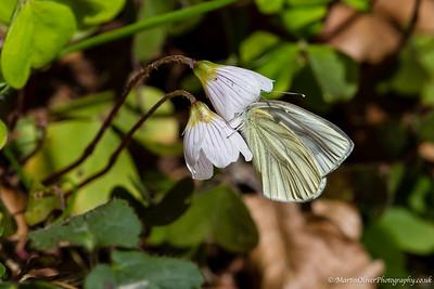 Butterflies, Moths & Others