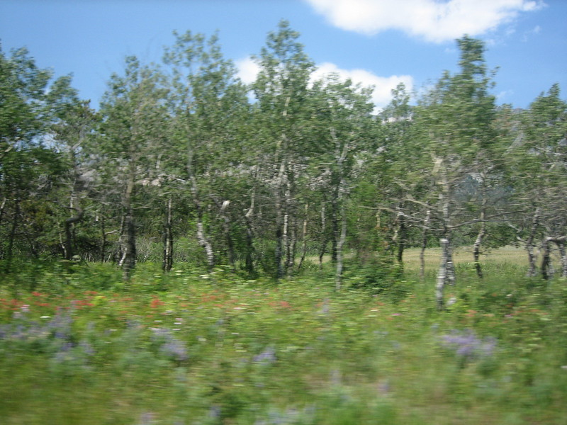 2008-07-24-YOCAMA-Montana_2588.jpg