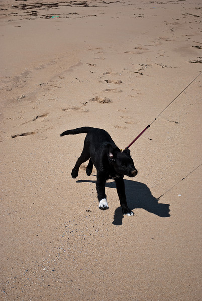 Rattray Head Beach-16