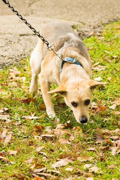 10-11-14 Parkland PRC walk for life (25).jpg