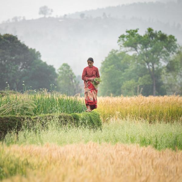 Nepal 073(20150408-DSCF0719)
