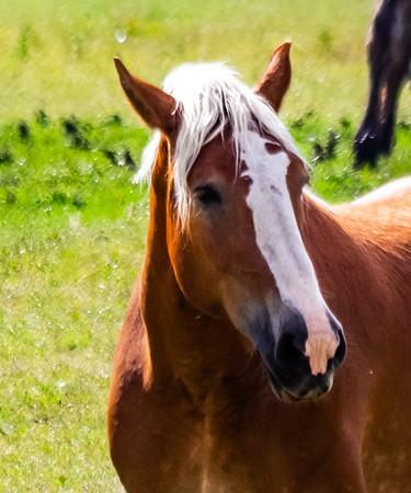Horses at Hardware Ranch Wildlife Management Area, Utah