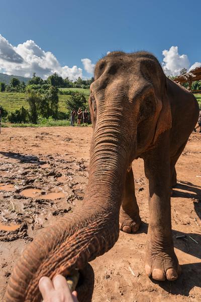 elephant-sanctuary-chiang-mai-6.jpg