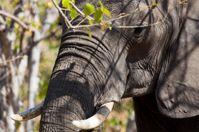 Botswana-17.jpg