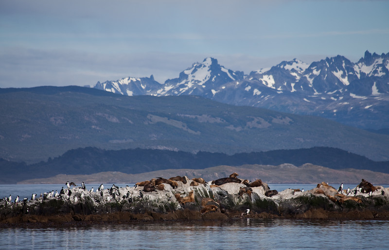 Sea lion colony in Beagle channel