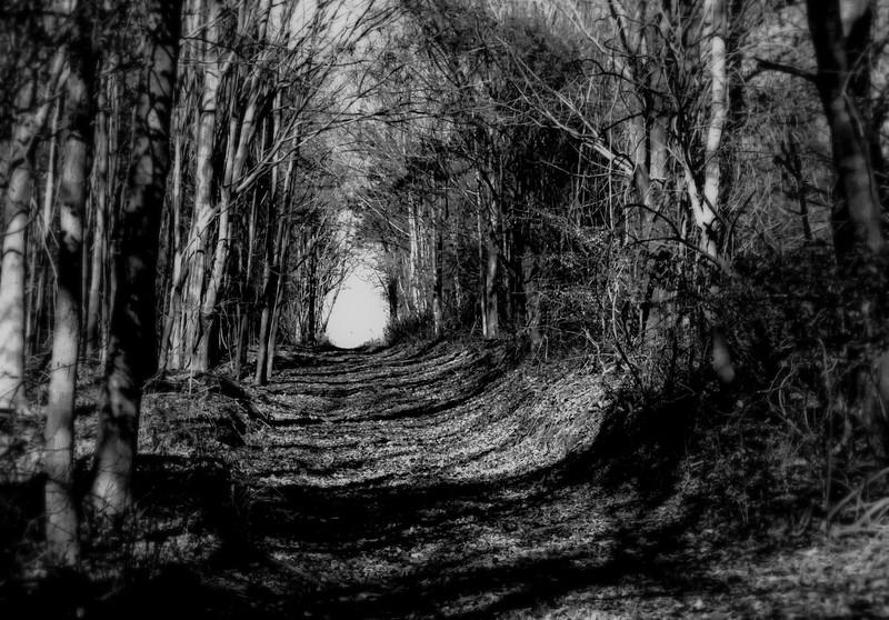 Path 2 on the Hunt.jpg