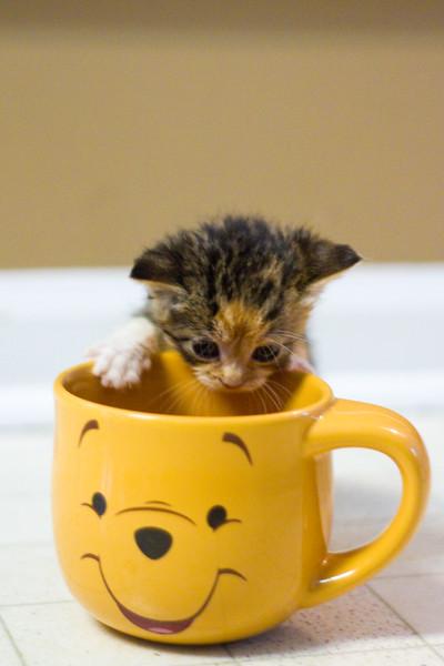 Kittens-0307.jpg