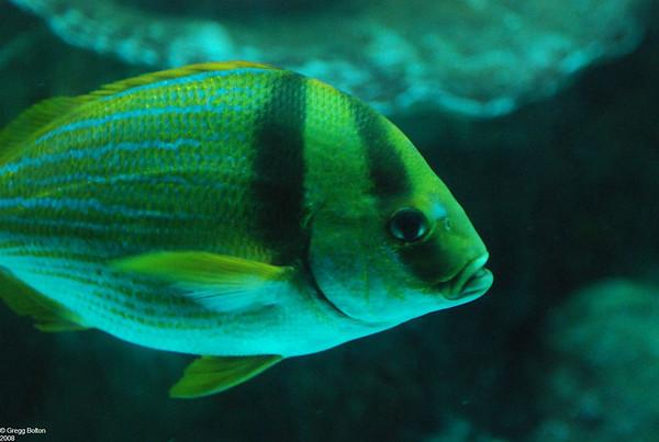 2008-03-21 New England Aquarium Visit