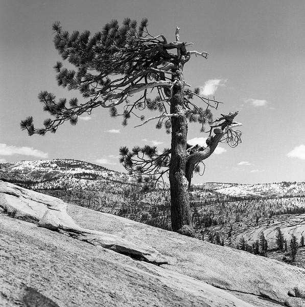Yosemite_052018024.jpg