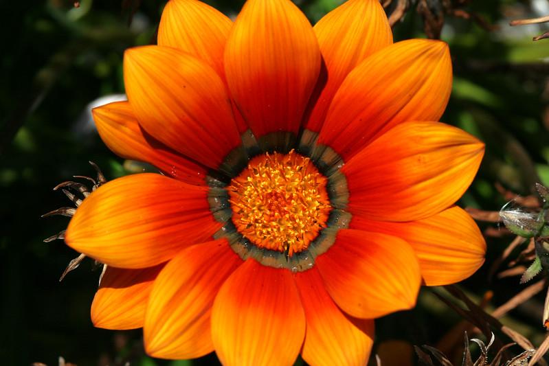 2354 Orange Flower.jpg