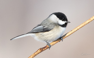 Birds of Indiana 3