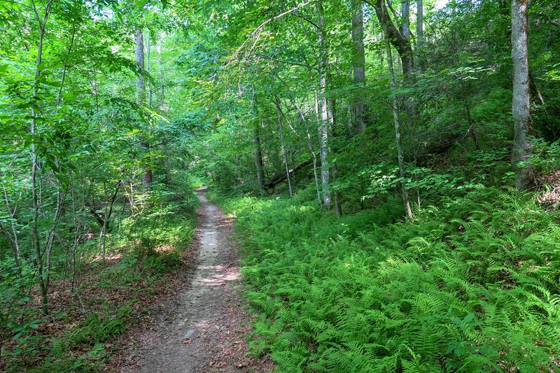 Bradley Creek Trail -- 2,400'