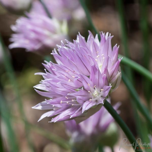 FlowersByMacro-4122.jpg