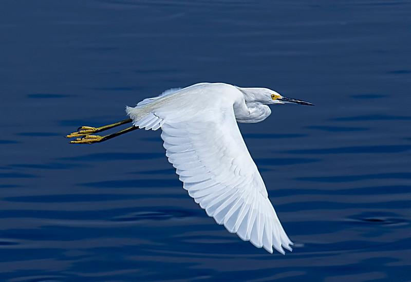 Egret-14.jpg