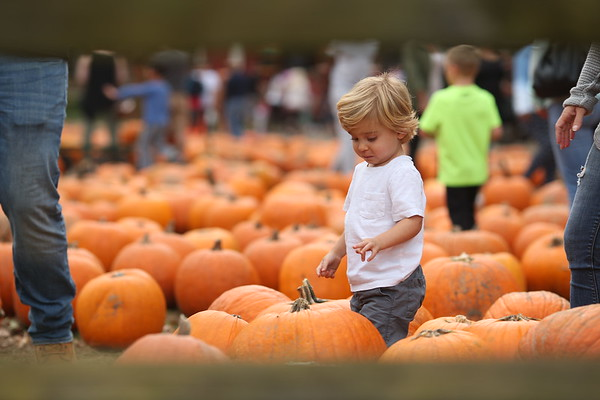 PUMPKIN PATCH 2017 PROOFS