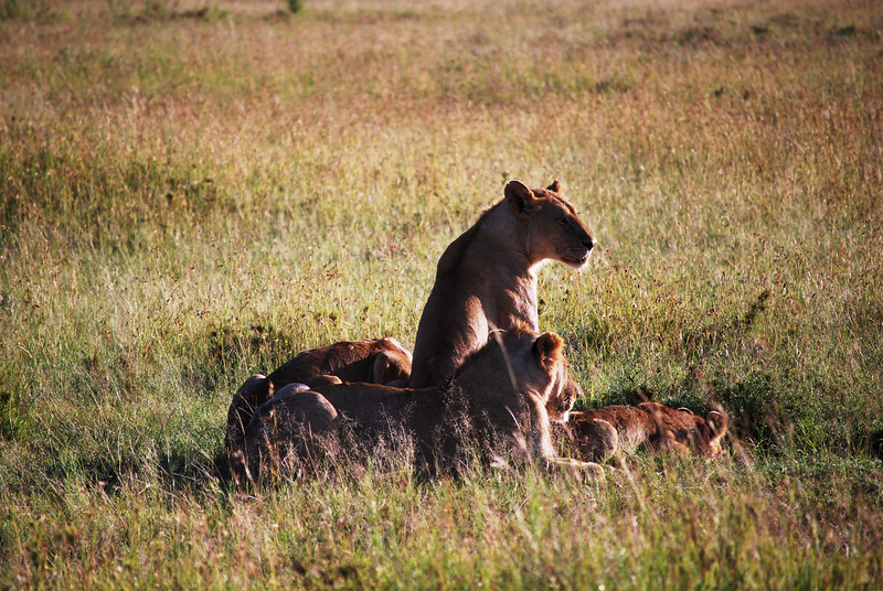 Serengeti (103).JPG